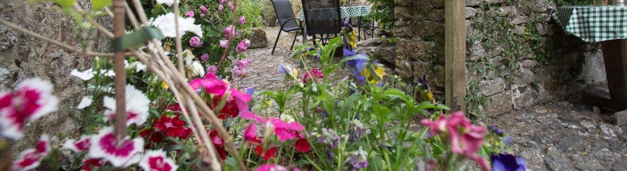 Summer garden to enjoy cream teas at Higher Venton Farm